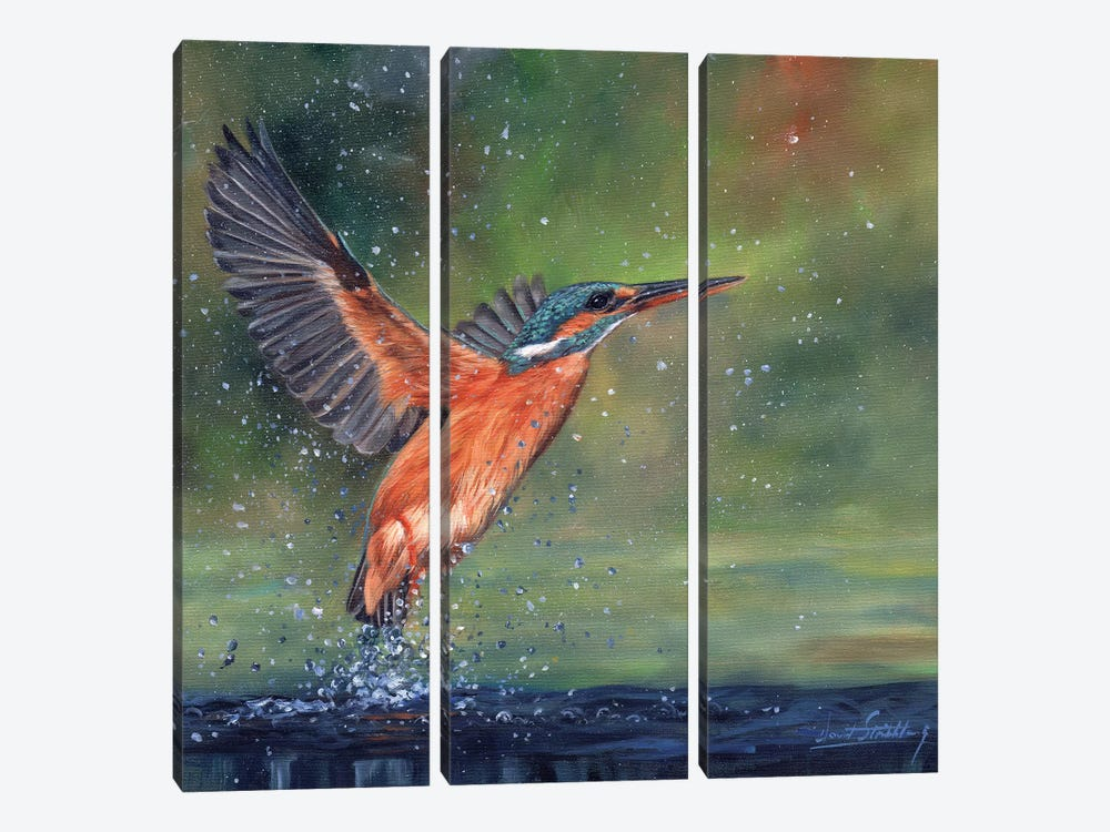Kingfisher by David Stribbling 3-piece Canvas Wall Art