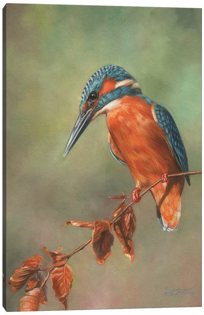 Kingfisher Perched Canvas Art Print