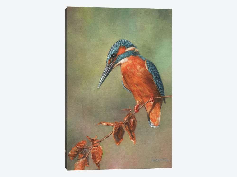 Kingfisher Perched by David Stribbling 1-piece Art Print