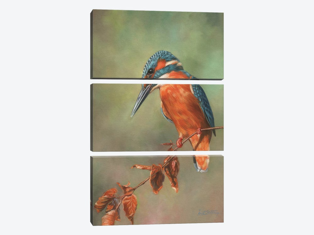 Kingfisher Perched by David Stribbling 3-piece Canvas Art Print
