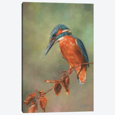 Kingfisher Perched Canvas Print #STG53} by David Stribbling Canvas Art Print