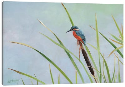 Kingfisher Perched Among The Reeds Canvas Art Print