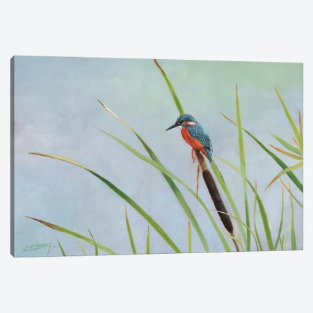 Kingfisher Perched Among The Reeds Canvas Print #STG54} by David Stribbling Canvas Art