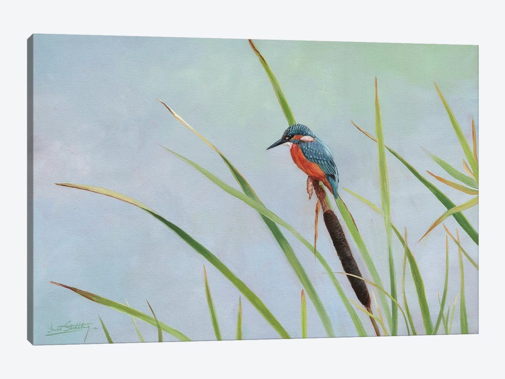 Kingfisher Perched Among The Reeds by David Stribbling 1-piece Canvas Wall Art