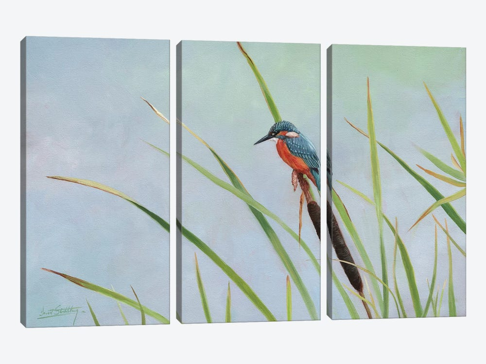 Kingfisher Perched Among The Reeds by David Stribbling 3-piece Canvas Artwork