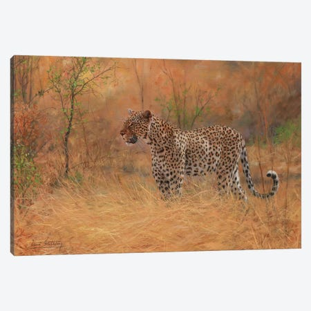 Leopard In Forest Canvas Print #STG55} by David Stribbling Canvas Wall Art