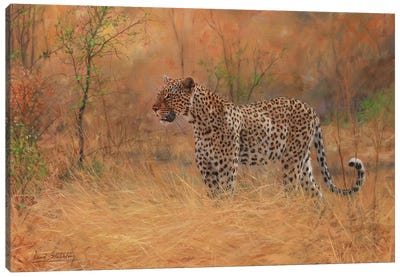 Leopard In Forest Canvas Art Print