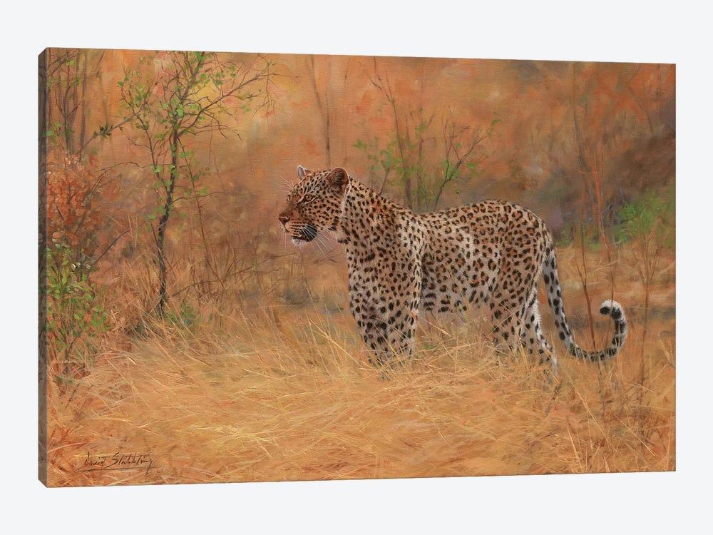 Leopard In Forest by David Stribbling 1-piece Canvas Print