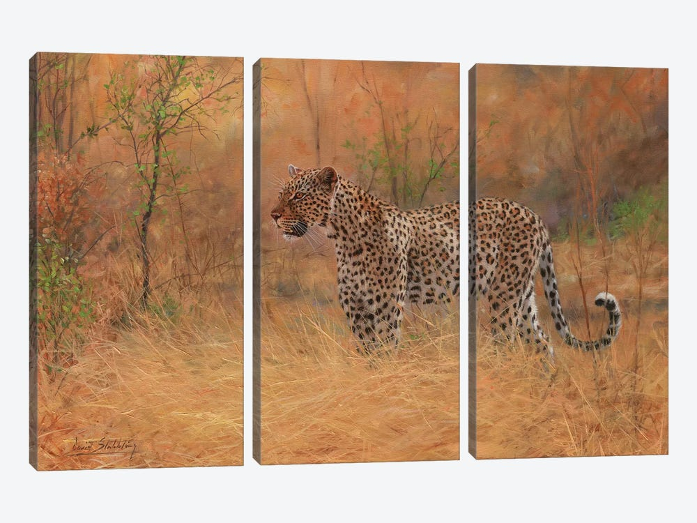 Leopard In Forest by David Stribbling 3-piece Canvas Art Print