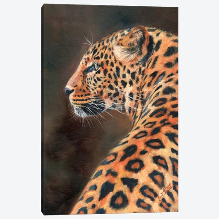 Leopard Profile Canvas Print #STG56} by David Stribbling Canvas Wall Art