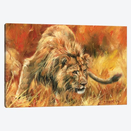 Lion Alert Canvas Print #STG57} by David Stribbling Canvas Wall Art