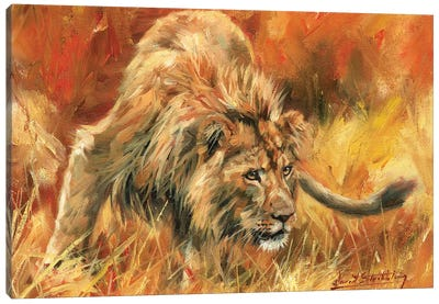 Lion Alert by David Stribbling Canvas Art Print