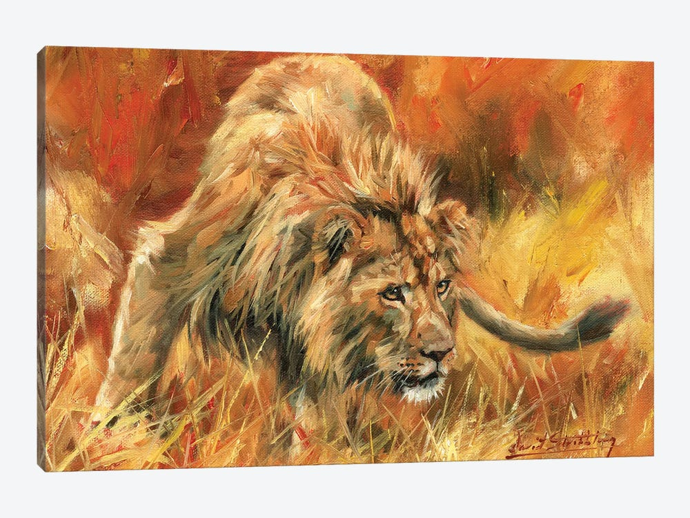 Lion Alert by David Stribbling 1-piece Canvas Print