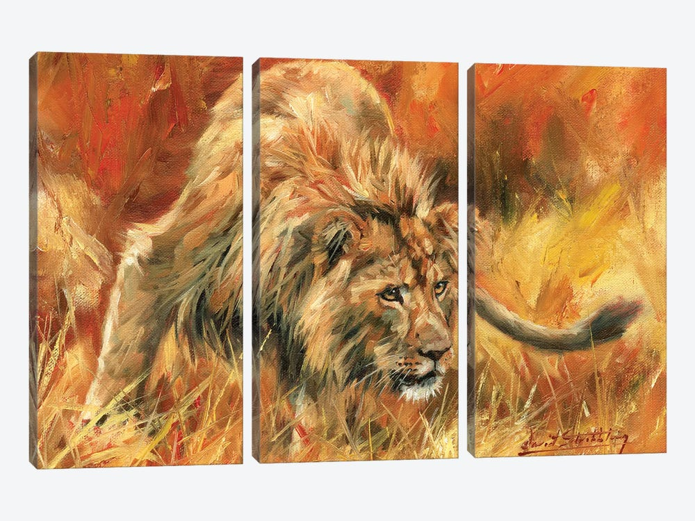 Lion Alert by David Stribbling 3-piece Art Print