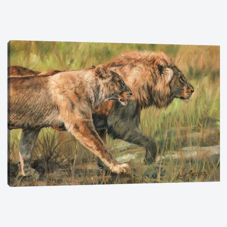 Lion And Lioness Canvas Print #STG58} by David Stribbling Canvas Print