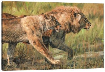 Lion And Lioness Canvas Art Print