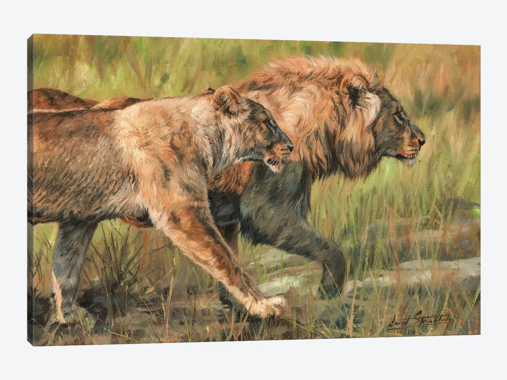 Lion And Lioness by David Stribbling 1-piece Canvas Art