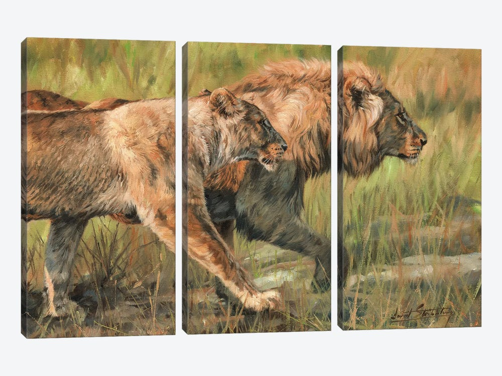 Lion And Lioness by David Stribbling 3-piece Canvas Wall Art