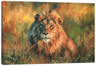 Lion At Sunset Canvas Art Print