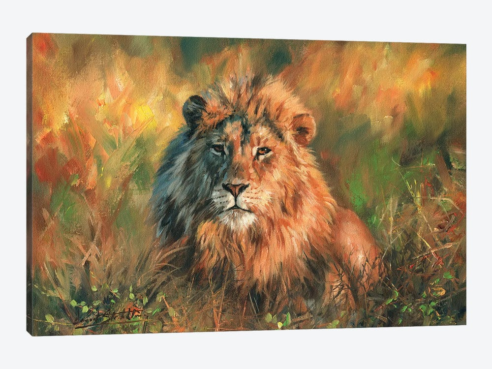 Lion At Sunset by David Stribbling 1-piece Art Print