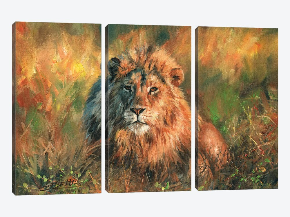 Lion At Sunset by David Stribbling 3-piece Canvas Art Print