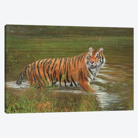Amur Tiger Cooling Off Canvas Print #STG5} by David Stribbling Canvas Wall Art