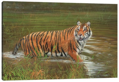 Amur Tiger Cooling Off Canvas Art Print