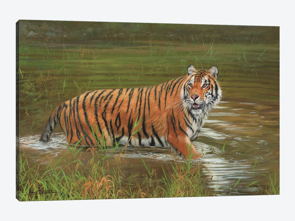 Amur Tiger Cooling Off by David Stribbling 1-piece Art Print
