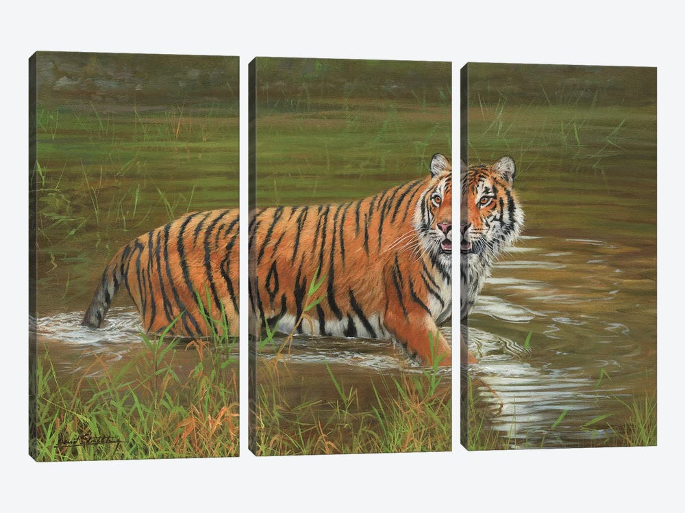 Amur Tiger Cooling Off by David Stribbling 3-piece Canvas Art Print