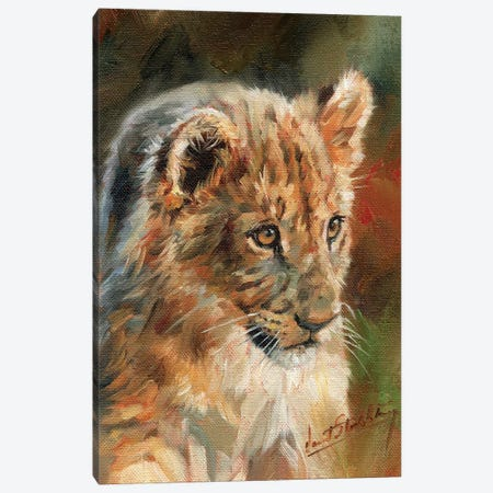 Lion Cub Canvas Print #STG60} by David Stribbling Canvas Wall Art