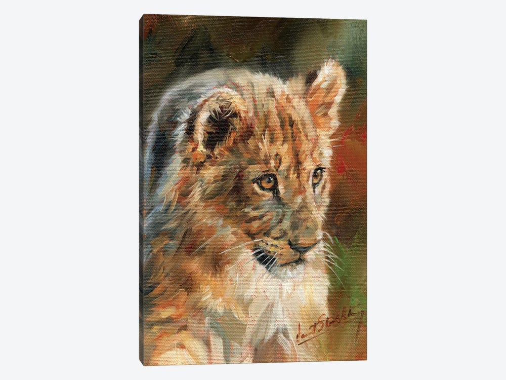 Lion Cub by David Stribbling 1-piece Canvas Art Print