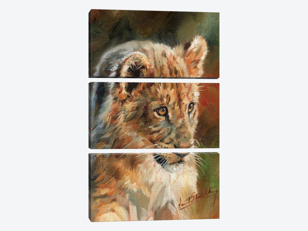 Lion Cub by David Stribbling 3-piece Canvas Print