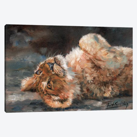 Lion Cub On Back Canvas Print #STG61} by David Stribbling Canvas Art