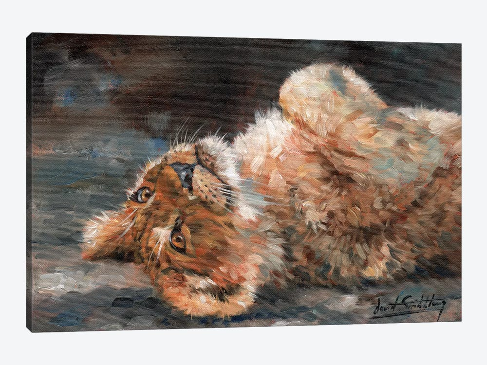 Lion Cub On Back by David Stribbling 1-piece Canvas Artwork