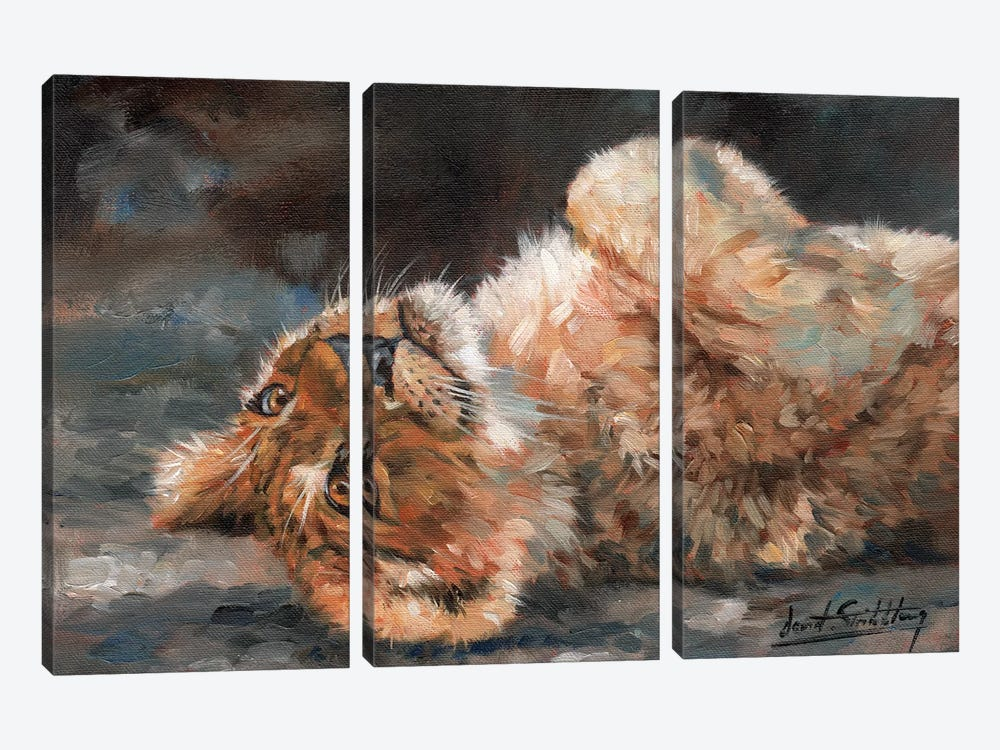 Lion Cub On Back by David Stribbling 3-piece Canvas Wall Art