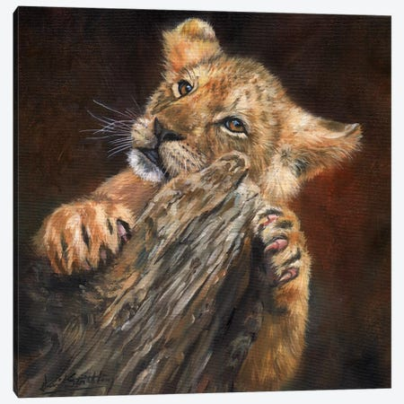 Lion Cub Tree Canvas Print #STG62} by David Stribbling Canvas Wall Art
