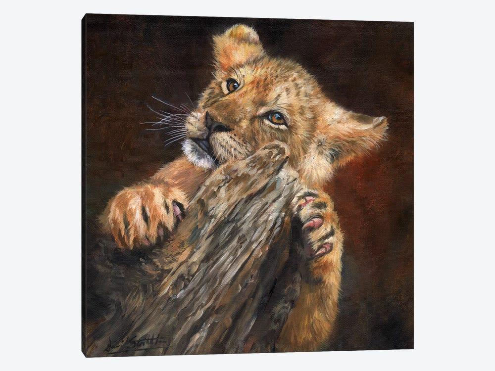 Lion Cub Tree by David Stribbling 1-piece Canvas Art Print