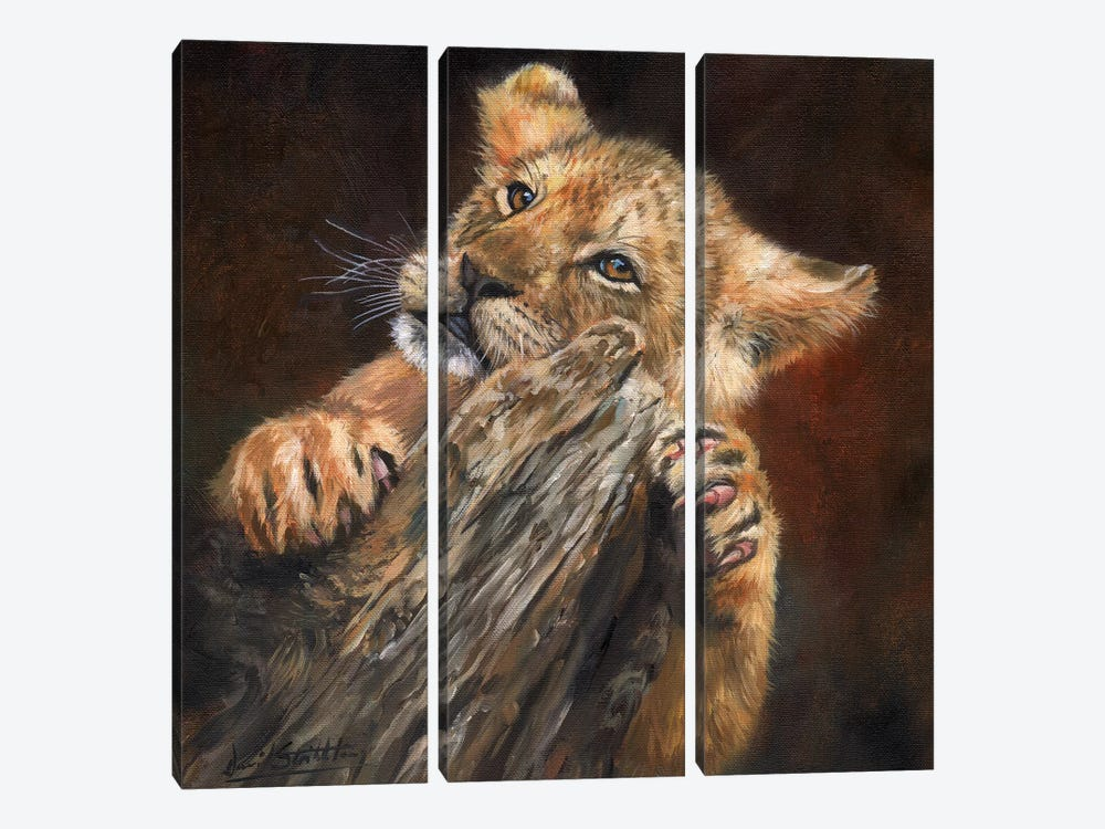 Lion Cub Tree by David Stribbling 3-piece Canvas Print