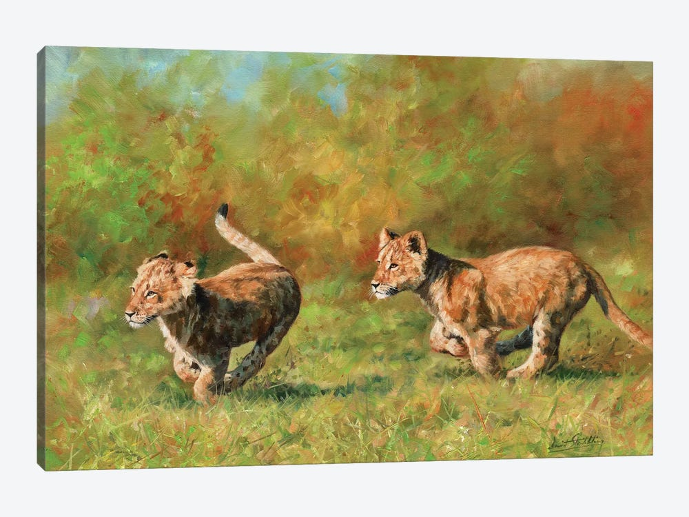 Lion Cubs Running by David Stribbling 1-piece Canvas Artwork