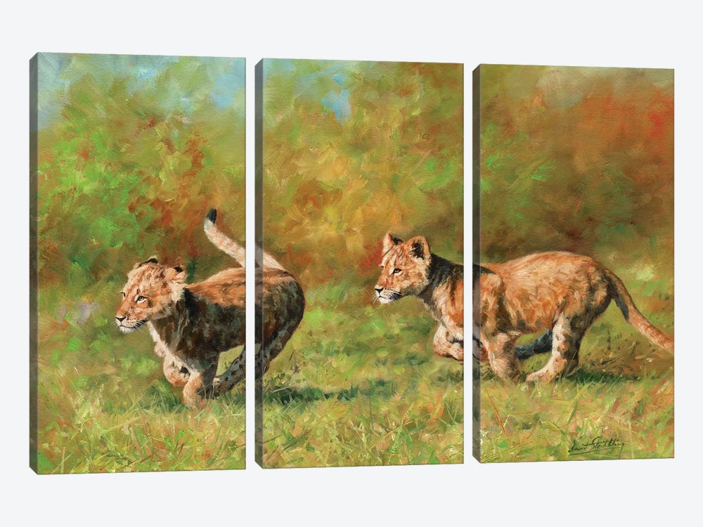 Lion Cubs Running by David Stribbling 3-piece Canvas Art