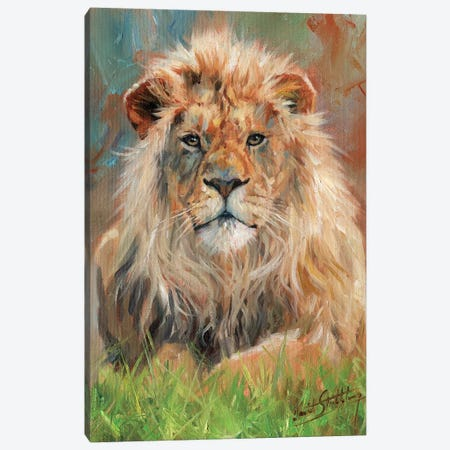 Lion Front Canvas Print #STG65} by David Stribbling Art Print