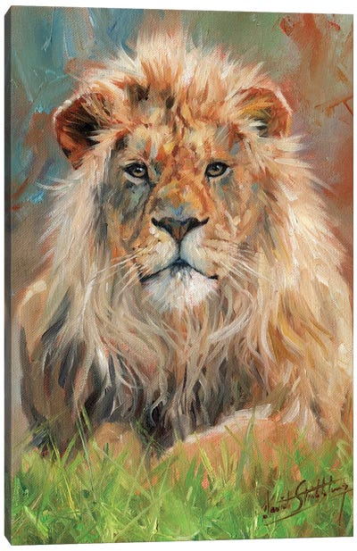 Lion Front by David Stribbling Canvas Art Print