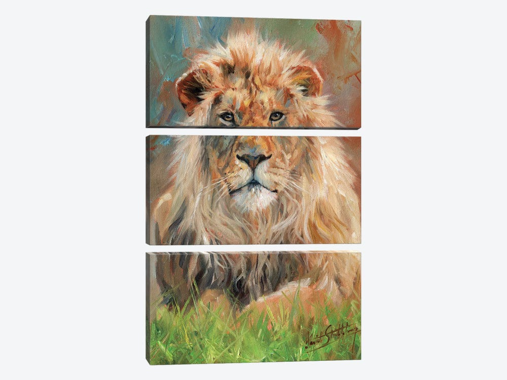 Lion Front by David Stribbling 3-piece Canvas Art
