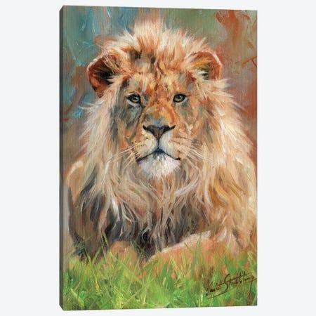 Lion Front Canvas Print #STG65} by David Stribbling Art Print