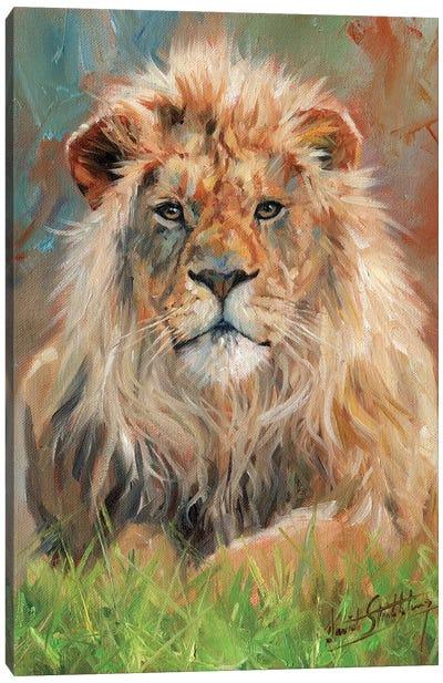 Lion Front Canvas Art Print