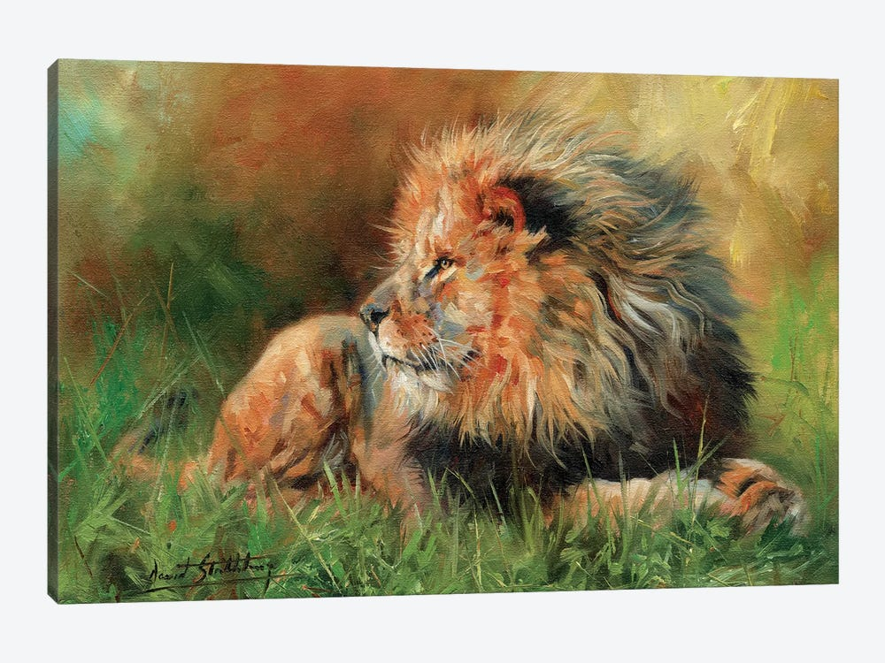 Lion Full by David Stribbling 1-piece Canvas Art Print