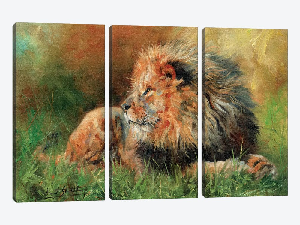 Lion Full by David Stribbling 3-piece Art Print