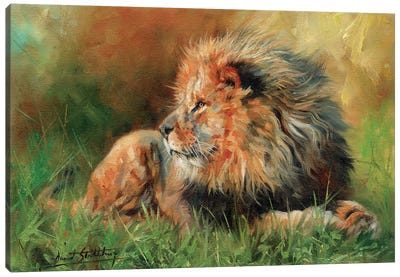 Lion Full Canvas Art Print