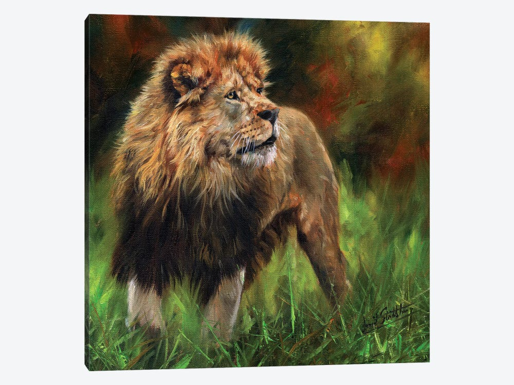 Lion Full Length by David Stribbling 1-piece Canvas Art