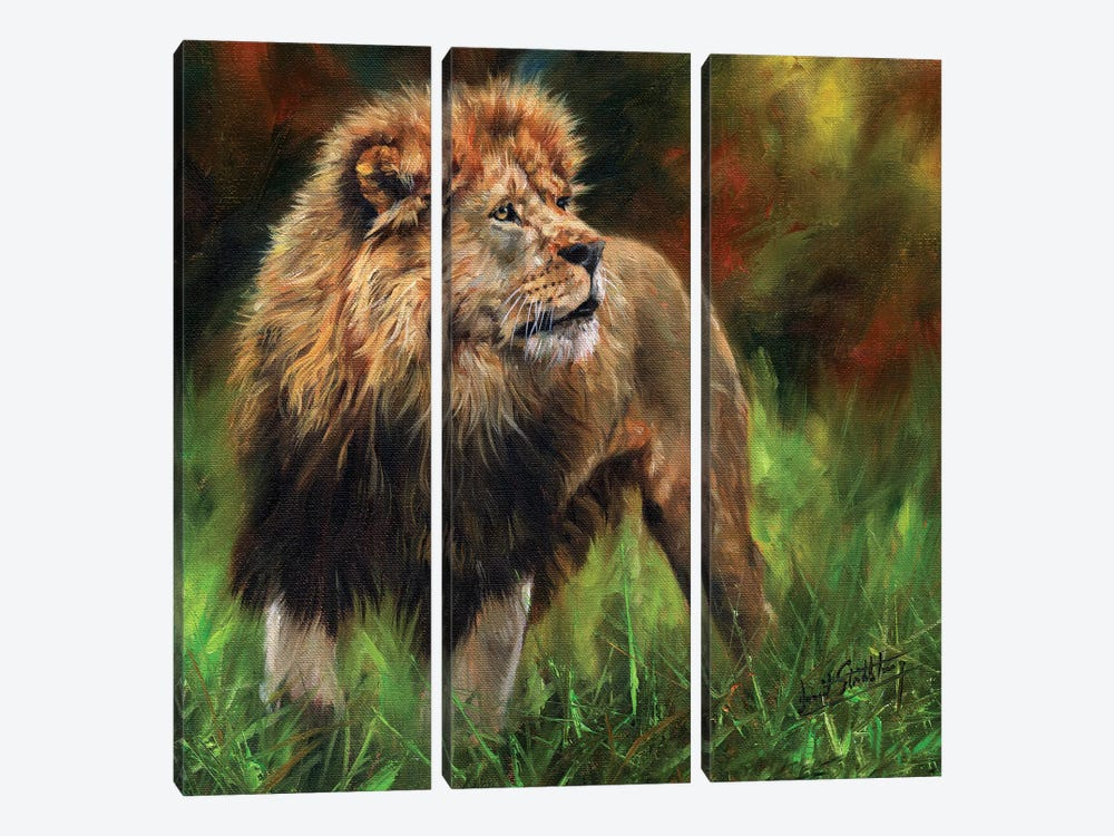 Lion Full Length by David Stribbling 3-piece Canvas Art